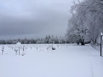 snow-012317
