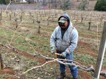 pruning-part-1b