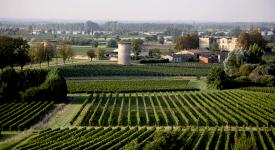 Bourg Vineyard