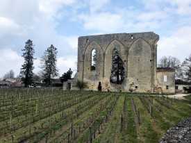 St. Emilion vineyard and medieval ruin