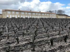 Pauillac - Chateau Mouton Rothschild winery and vineyard